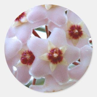 hoya carnosa flower sticker