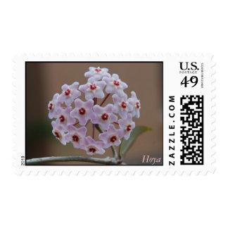 Hoya Postage Stamps