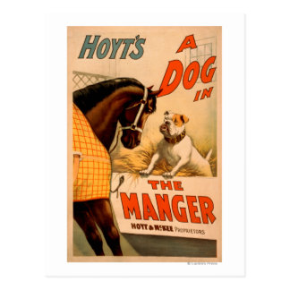Hoyt's A dog in the Manger Theatre Poster Postcard
