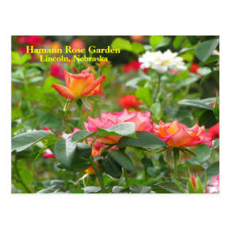 HRG Postcard  #300n 0300
