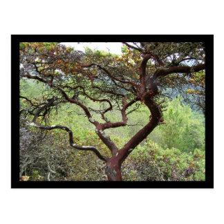 Huckleberry Preserve Postcard