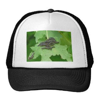 huddling caterpillar  trucker hat