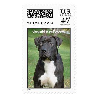 Hudson - dognkittcity.org Stamp