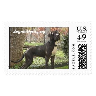 Hudson - dognkittycity.org Stamp