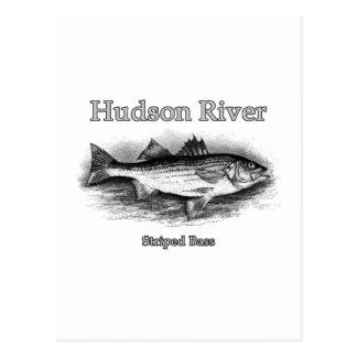 Hudson River Vintage Striped Bass Logo Postcard