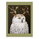 Hudson the snowy owl postcard