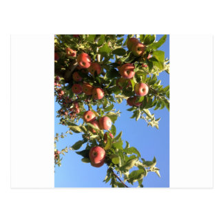 Hudson Valley Apples Postcard