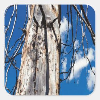 Hueco soñoliento de los árboles de la naturaleza pegatina cuadrada