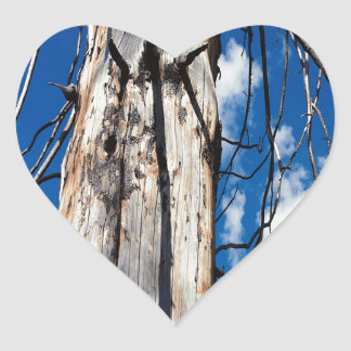 Hueco soñoliento de los árboles de la naturaleza pegatina en forma de corazón