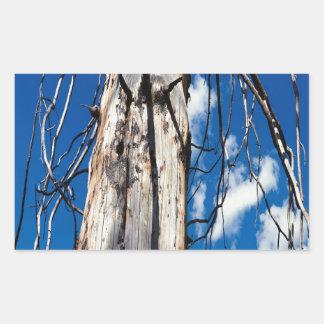 Hueco soñoliento de los árboles de la naturaleza pegatina rectangular