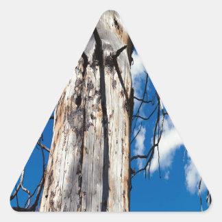 Hueco soñoliento de los árboles de la naturaleza pegatina triangular