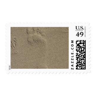Huella en el arte de la fotografía de la arena sello postal
