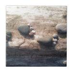 Huellas de la roca teja