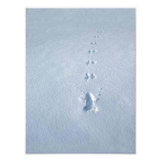 Huellas salvajes del pájaro en nieve fotografias