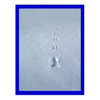 Huellas salvajes del pájaro en nieve postales