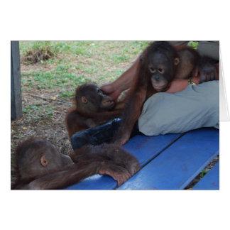 Huérfanos del bebé del orangután tarjetón