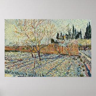 Huerta con Cypress de Vincent van Gogh Póster
