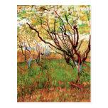 Huerta de Van Gogh en el flor, impresionismo del v Tarjeta Postal