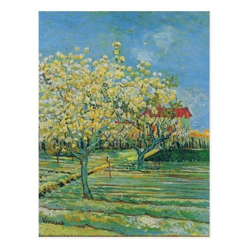 Huerta en el flor, Vincent van Gogh Postales
