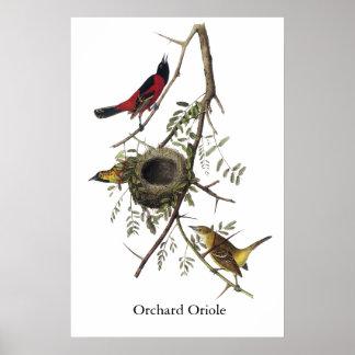Huerta Oriole - John James Audubon Impresiones