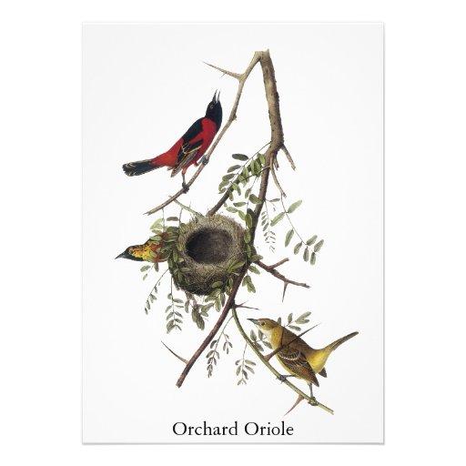 Huerta Oriole - John James Audubon Comunicados Personalizados