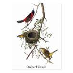 Huerta Oriole - John James Audubon Tarjeta Postal