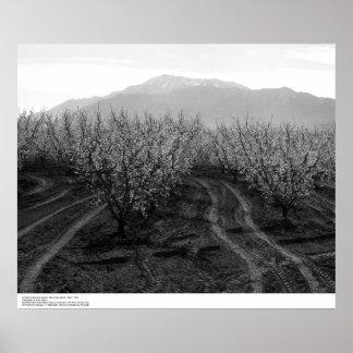 Huertas en la prohibición de las alturas, Mt. San  Póster
