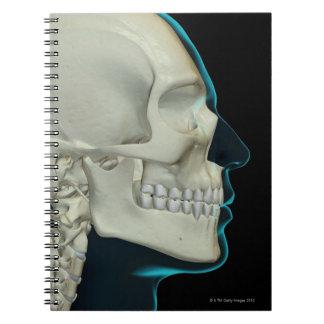 Huesos de la cabeza y de la cara 2 libro de apuntes