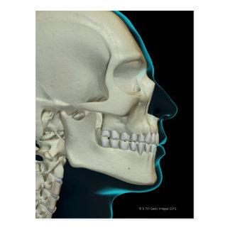 Huesos de la cabeza y de la cara 2 postal