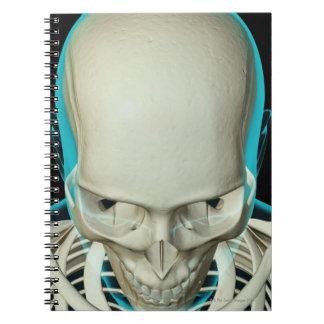 Huesos de la cabeza y de la cara libro de apuntes