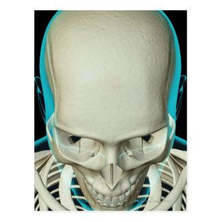 Huesos de la cabeza y de la cara tarjeta postal