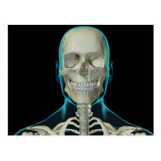Huesos de la cabeza y del cuello 2 postal