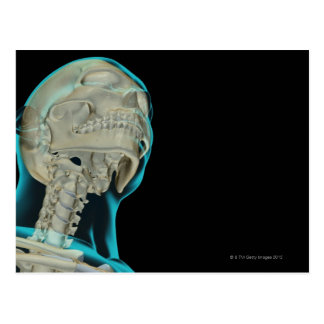 Huesos de la cabeza y del cuello 5 postales