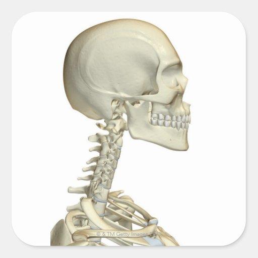 Huesos de la cabeza y del cuello 6 pegatina cuadrada