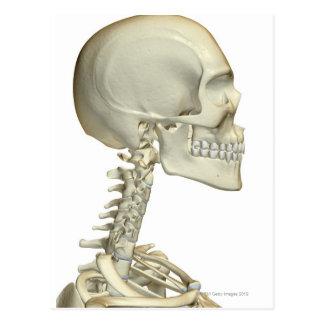 Huesos de la cabeza y del cuello 6 postales