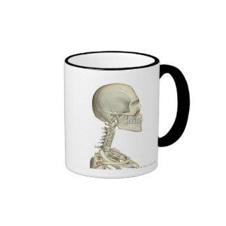 Huesos de la cabeza y del cuello 6 taza de café