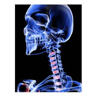 Huesos de la cabeza y del cuello 7 postal