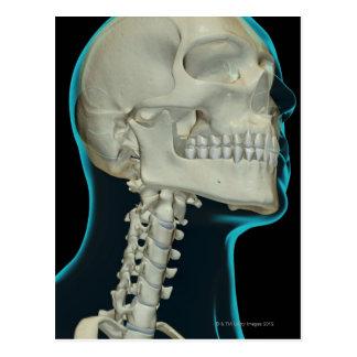 Huesos de la cabeza y del cuello 8 tarjeta postal