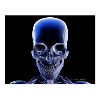 Huesos de la cabeza y del cuello 9 tarjeta postal
