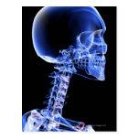Huesos de la cabeza y del cuello postal