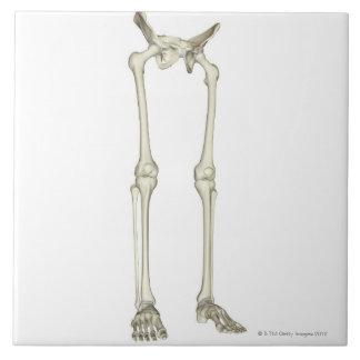 Huesos de la parte inferior del cuerpo 2 azulejo cuadrado grande