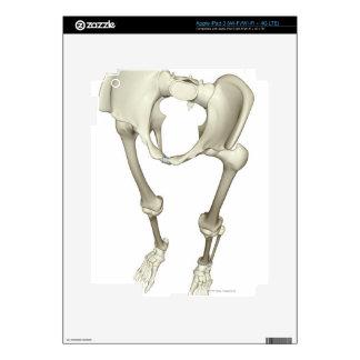 Huesos de la parte inferior del cuerpo 3 pegatinas skins para iPad 3