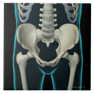 Huesos de la parte inferior del cuerpo azulejo cuadrado grande