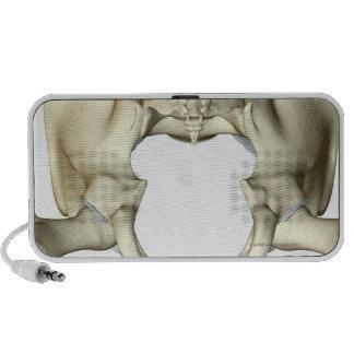 Huesos de la pelvis 4 iPod altavoces