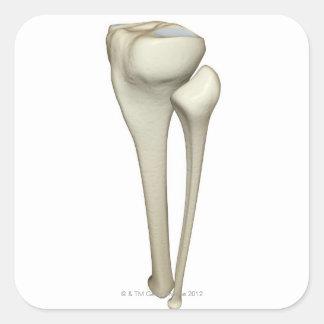 Huesos de la pierna 4 colcomania cuadrada