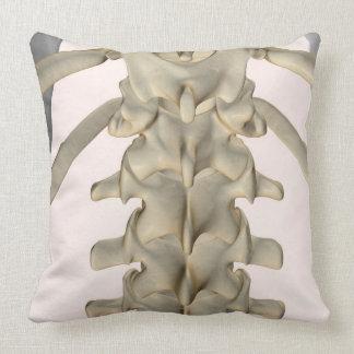 Huesos de las vértebras lumbares 3 almohada