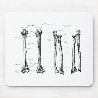 Huesos de los miembros superiores tapetes de ratones
