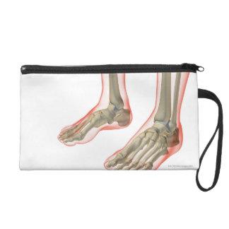 Huesos de los pies