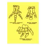 Huesos de pie del dinosaurio postales