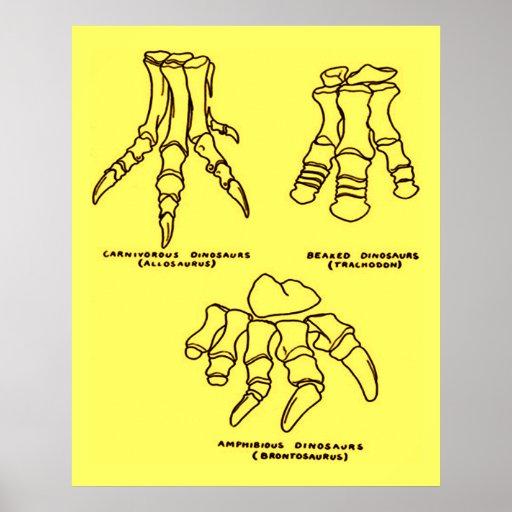 Huesos de pie del dinosaurio póster
